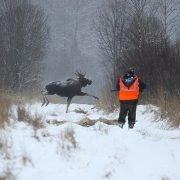 Приглашаем на охоту на лося и зимнюю рыбалку