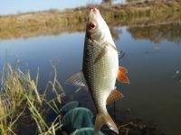 Советы по поплавочной ловле осенней плотвы