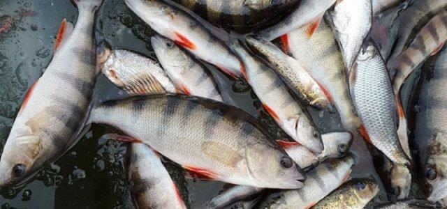 Комплекты для зимней рыбалки