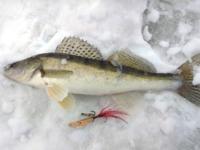 Бокоплав для зимней рыбалки