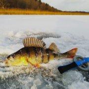 Особенные советы для зимней рыбалки