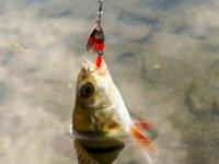Ловля весеннего окуня по первой воде
