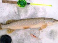 Рыбалка на балансир зимой